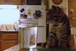 cats drinking habit