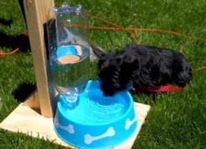 Dogs drinking habits