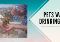 Pets Water Drinking Guide: Essentials for Cats and Dogs
