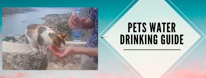 A Complete guide for pets' daily water intake
